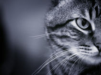 Portrait of cat in black and white by Gema Ibarra