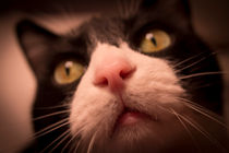 Pink Cat Nose by Gema Ibarra