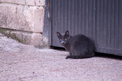 Img-6557-gato-gris