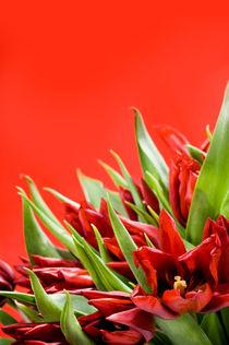 Bunch of red tulips bouquet von Arletta Cwalina
