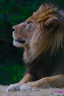 Lion IV von Carlos Segui