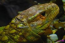 Lizard II von Carlos Segui