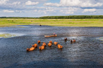 Natural bucolic view in Biebrza wetland by Arletta Cwalina