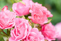 Beautiful pink roses bunch von Arletta Cwalina