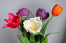 Tulips variety by Maria Livia Chiorean