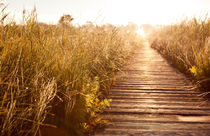 boardwalk and morass grass by Arletta Cwalina