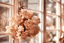 hortensia old dried bouquet hang von Arletta Cwalina