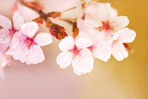 Blooming fairy cherry tree by Arletta Cwalina