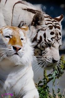 Tigers III von Carlos Segui