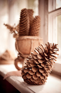Large old dried cones on windowsill von Arletta Cwalina