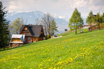 spring meadow and wooden house by Arletta Cwalina
