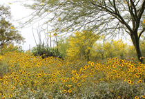 Tucson Wildflowers by Kume Bryant