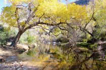 Sabino Canyon Creek von Kume Bryant
