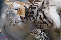 Tigers IV von Carlos Segui