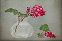 Zier-Johannisbeere von Ruby Lindholm