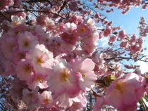 Frühlings Erwachen von rosenlady
