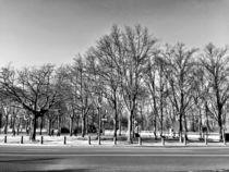 Garten in Winter by Ligia Fascioni
