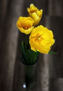 Yellow tulips by Maria Livia Chiorean