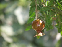 Pomegranate on tree von Michael Lichtenstein
