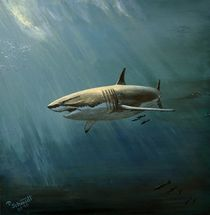 White Shark by Peter Schmidt