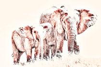 Animals Of The Rainbow Elephants by Aidan Moran