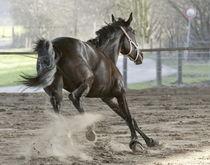 Spielendes Pferd by Mario Hommes