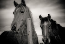 Horses on fence by a-costa