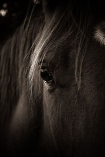 Horse portrait by a-costa