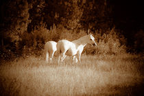 White horses on sepia by a-costa