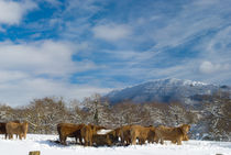 Navarre winter scenery by a-costa