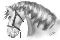 Horse head von cvill