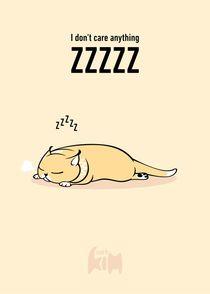 Kim-cat-zzzzz