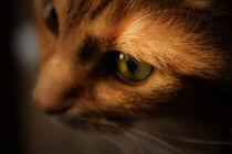 Cat von noxfotografie
