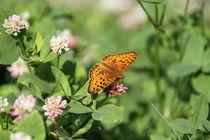 Schmetterling von robby-der-knipser