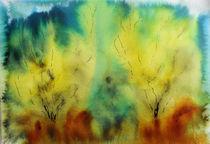 Blühender Ginster von Gerhard Stolpa