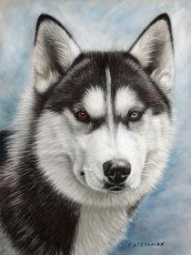 Siberian husky by Tobiasz Stefaniak