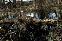 Der umgekippte Baum von framboise
