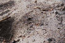 Sandstrand auf Langeoog von framboise