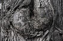 Das Herz im Baum von framboise