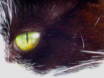 Cat's Eye by Sabine Cox