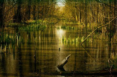 Wasserlandschaft2a