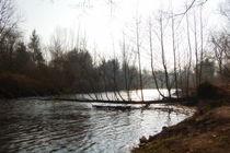 Gefallener Baum überm Fluss von Anke Franikowski