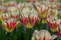 Frühlingsfreude by lisa-glueck