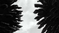 Pine Cones von Richard Davis