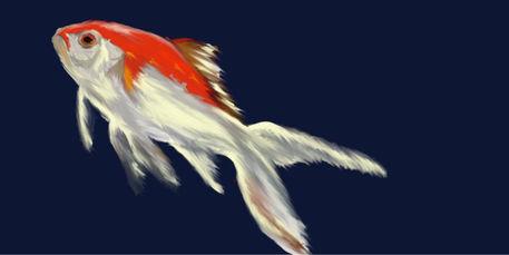 Fish-on-blue