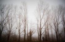 Bäume im Morgennebel  by Anke Franikowski