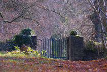Gate through the Woods by Dave  Byrne