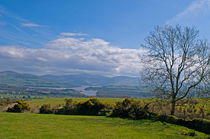 Clouds, Trees, Blue Skies, Ireland at it's Best by Dave  Byrne