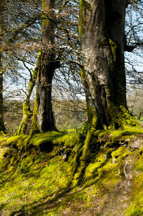 My Roots by Dave  Byrne