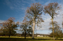 Trees in a Summer Breeze by Dave  Byrne